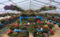 Woodly Greenhouse Flowers